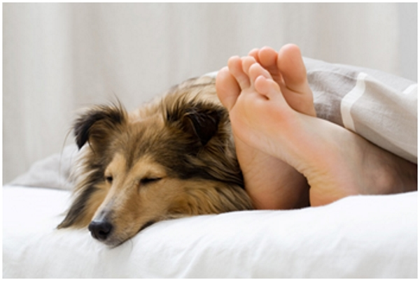 Домашние животные в спальни