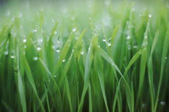 Растения фильтры