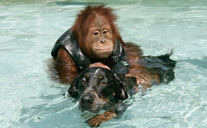 Орангутанг помогает больному псу