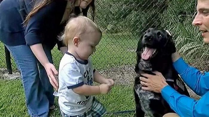 Собаки спасла малыша хозяев от плохой няни