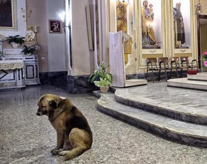 Овчарка ждет хозяина в церкви