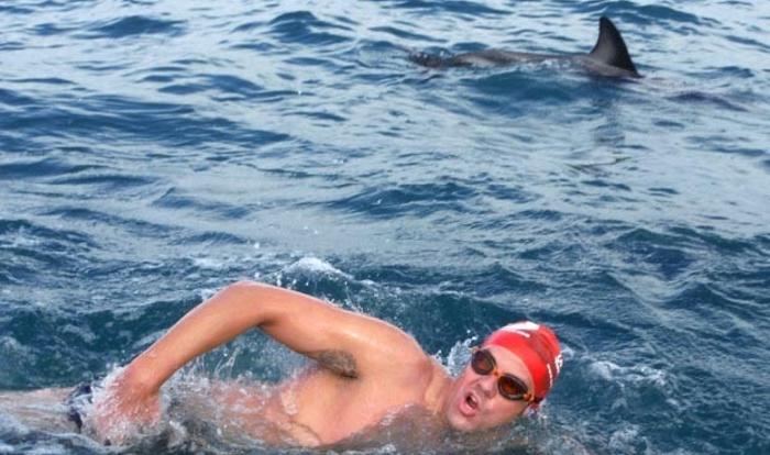 Дельфины спасла пловца