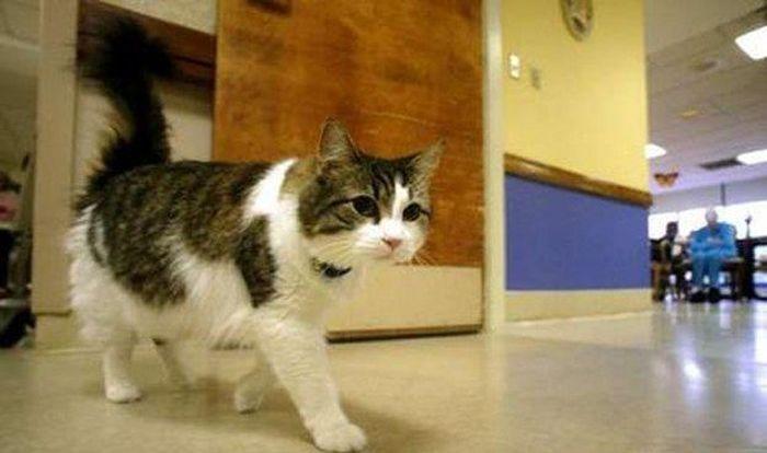 Кот в доме престарелых