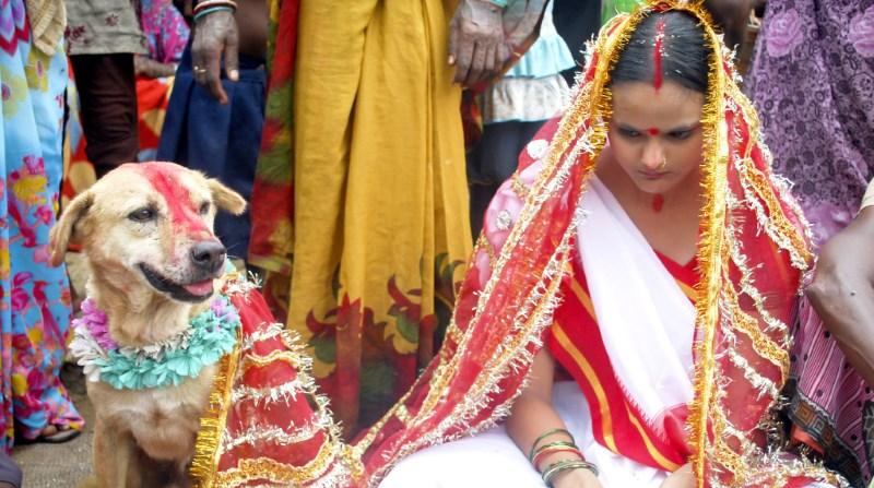 Индийская свадебная церемония с животным